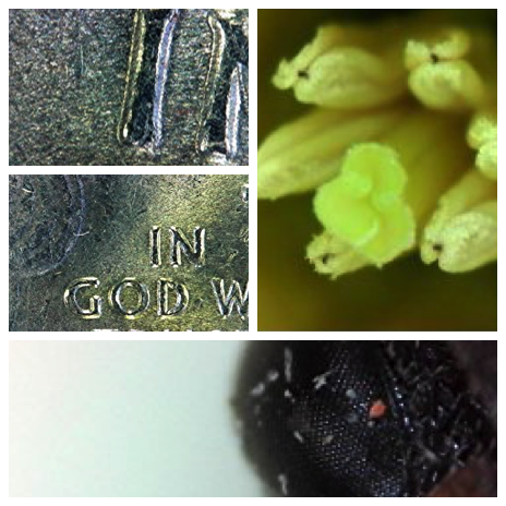 magnified images taken with the plugable 2.0 USB digital microscope